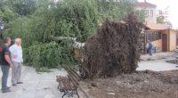 Доста поразии нанесе непривичният за Самоков и района много бурен вятър във вторник, на 24 март. Халата откърти огромен клон от дърво срещу болницата, при което бяха нанесени щети и […]