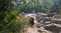 Служители на самоковското държавно горско стопанство възстановиха металния парапет около наблюдателната площадка на Черната скала над Боровец. Монтирани са липсващите елементи на оградата, която гарантира сигурността на туристите. Черната скала, […]