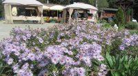 """За трета поредна година вилно селище """"Ягода"""" в Боровец на 22, 23 и 24 септември се състоя Празник на българщината. Организаторите, които стопанисват и съседното вилно селище """"Малина"""", както и […]"""