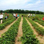 Испания търси берачи на ягоди