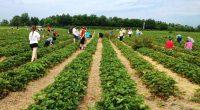 Производители от Испания търсят 800 кандидати за бране на ягоди. Интервютата ще се състоят през януари 2018 г. Одобрените кандидати ще заминат през февруари и март. Трудовите договори се подписват […]