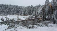 """Зеленото сърце на Самоков – парк """"Ридо"""", пострада може би най-много от суровите зимни условия в района ни през последните дни. Десетки сковани от сняг и лед дървета не издържаха […]"""