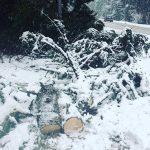 Паднали дървета в Боровец повредиха коли и вили