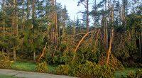 """Писмо с отговор """"И тази година гората на Ридо е съсипана от ветровали и снеголоми през зимата. В момента представлява тъжна гледка – нападали дървета, други прекършени наполовина. Въпросът е […]"""