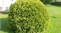 Предлагам декоративни растения за вашия двор, градина и вила: Eдроразмерни фиданки: 1. Широколистни: – плачеща черница – плачеща ива – липа /сребролистна и едролистна/ – гледичия и др. 2. Иглолистни: […]