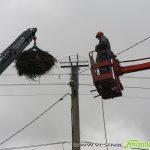 Специалисти монтират съоръжения за опазване на щъркелите в Самоковско