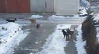 Национална програма за овладяване на популацията на безстопанствените кучета прие правителството на 13 март. В документа се прави изводът, че досегашната практика за прилагане на общински програми за овладяване на […]