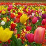 2751 самоковци празнуват имен ден на Цветница