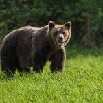 Застреляха мечка край Радуил